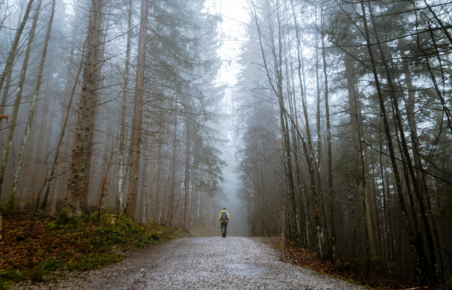 Person Walking Down Foggy Forest Path